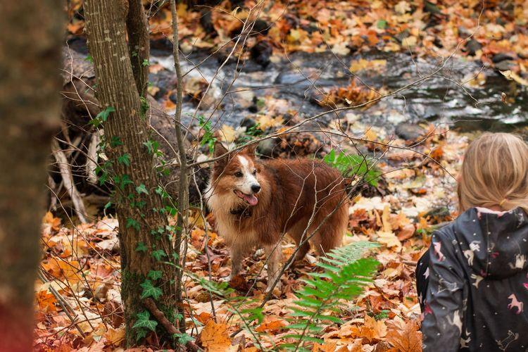 Autumnal stroll