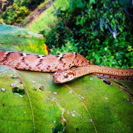 Instaraptiles Snake At Jambughoda ontheleafawesomeeyesdontknowitsnameDoubletaponthescreenfollow4followthanku