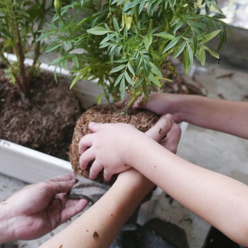 Human Hand Hand Human Body Part Real People Plant One Person Unrecognizable Person