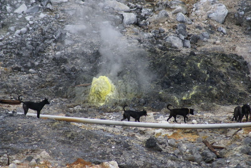 Cold Cold Temperature Doglife Dogs Fog Geology Geyser Hot Spring Long Exposure Motion Nature Outdoors Power In Nature Rock Rough Smoke Splashing Steam Street Dogs Waterfall Wildlife & Nature Winter