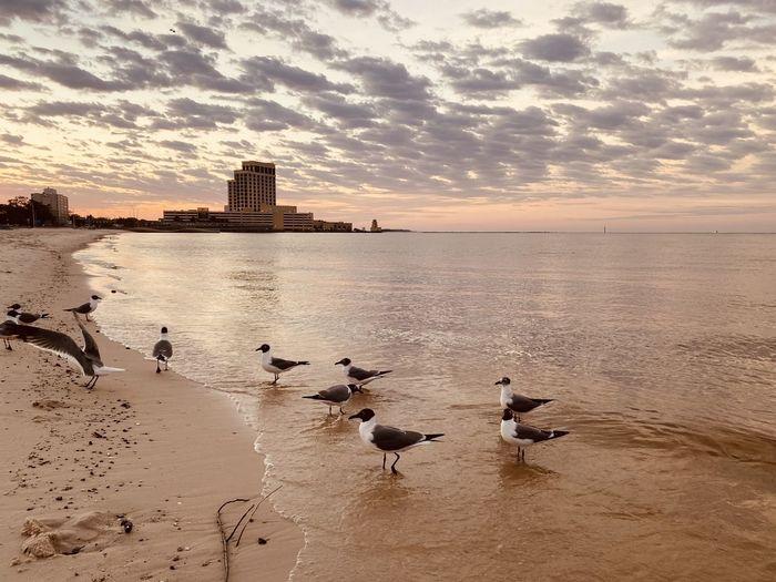Flock of seagulls on beach against sky during sunset