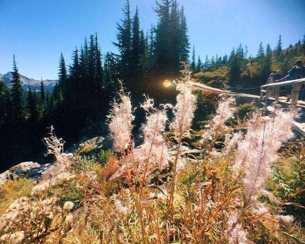On A Hike Mt. Rainier