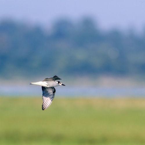 Bird flying in the sky