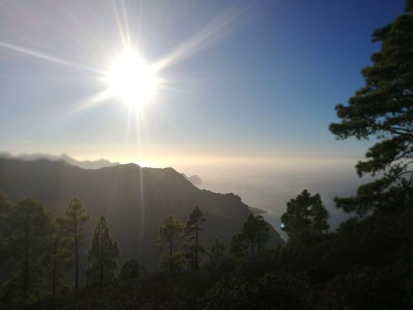 Silhoutte of Gran Canaria Pinar De Tamadaba. Las Palmas De Gran Canaria. Islas Canarias Gran Canaria Peace And Quiet Pinewood Sun Tree Mountain Sky No People Landscape Nature Forest Travel Destinations Beauty In Nature Sunset