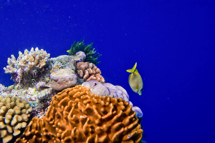 The great barrier reef coral sea, queensland australia