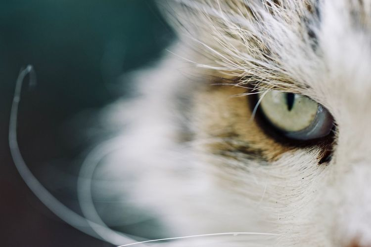 Close up of a cat's eye Cat Watching Grumpy Maine Coon Cat Moggy Persian Cat  Pet Love Pet Photography  Pet Portraits Animal Eye Cat Cat Eyes Cat Lover Cat Lovers Cat Photography Cat Portrait Close-up Domestic Domestic Animals Domestic Cat Feline Fluffy Fluffy Cat Grumpy Cat Pets Whisker My Best Photo