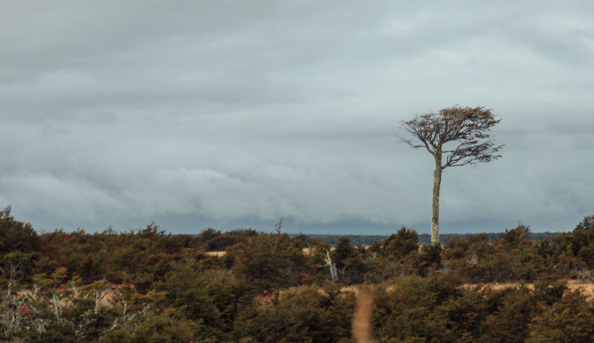Chile Nature Nature Photography Stormy Weather Travel Tree Wanderlust Beauty In Nature Clouds Day Grass Landscape Lone Nature No People On The Road Outdoors Patagonia Sky Tree