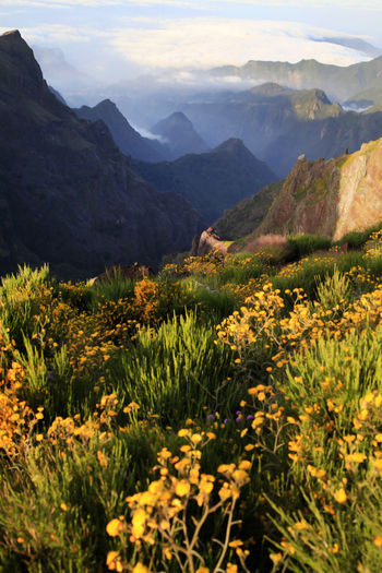 Flowers growing on mountain