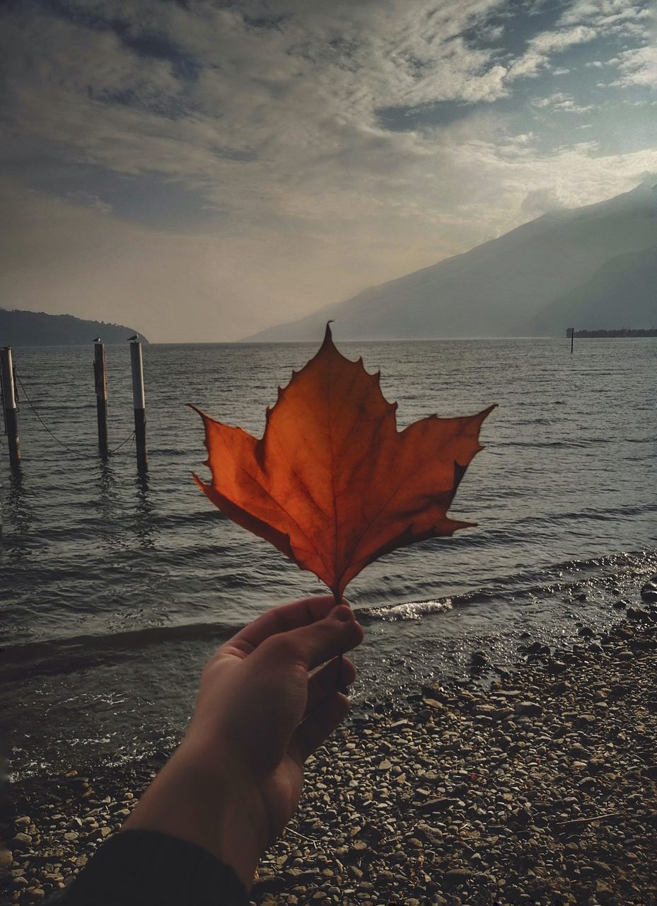 PERSON HOLDING MAPLE LEAF IN SEA AGAINST SKY