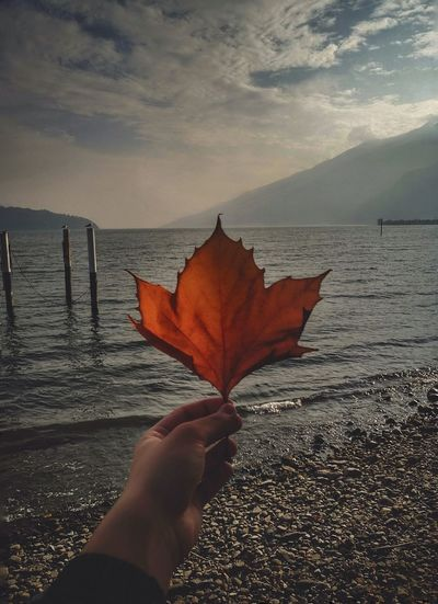 Person holding maple leaf in sea against sky during autumn