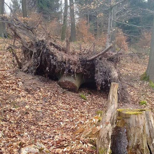 Wald Natur Selfmade Baum Baumstumpf Umgefallenerbaum