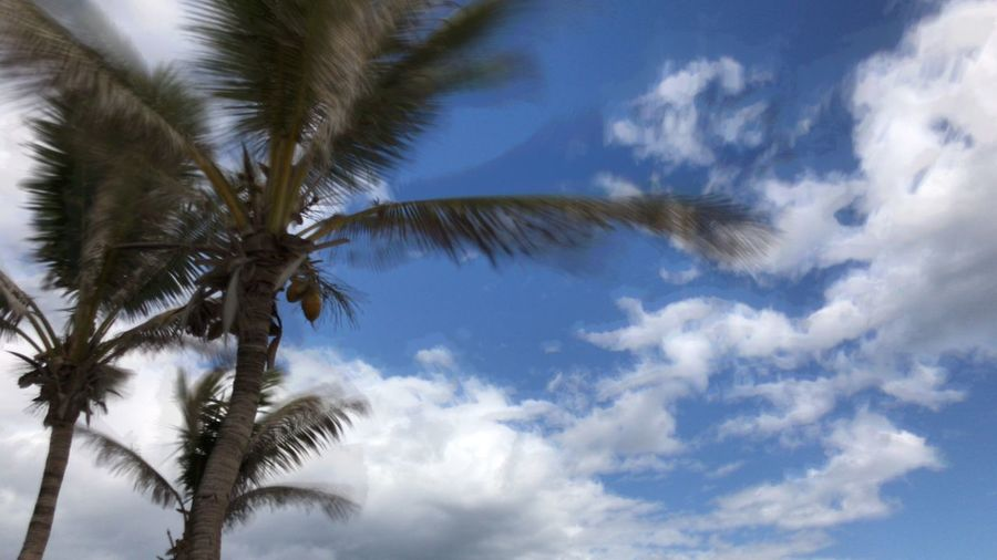 EyeEm Selects Palm Tree Low Angle View Sky Nature Beauty In Nature Tree Cloud - Sky No People Day Scenics Growth Outdoors Close-up L. Jeffrey Moore IPhone 7 Plus IPhoneography EyeEm Selects