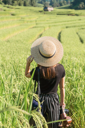 Back View Rice Paddy Green Nature Travel Chiang Mai | Thailand Woman Hat Plant Field Clothing Grass Land One Person Adult Rear View Landscape Agriculture Rural Scene Farm Growth Day Green Color Sun Hat Real People Women Outdoors Farmer Hairstyle