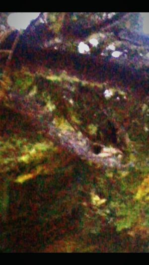 The Long Beach Peninsula Happenings Look Closely And You Will Find Othera That Live Amongst Ua Supernatural Serpent Head Abstract Multi Colored Outdoors Satellite View Astronomy