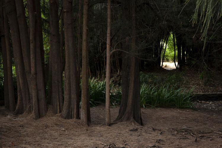 Tree Land Tree