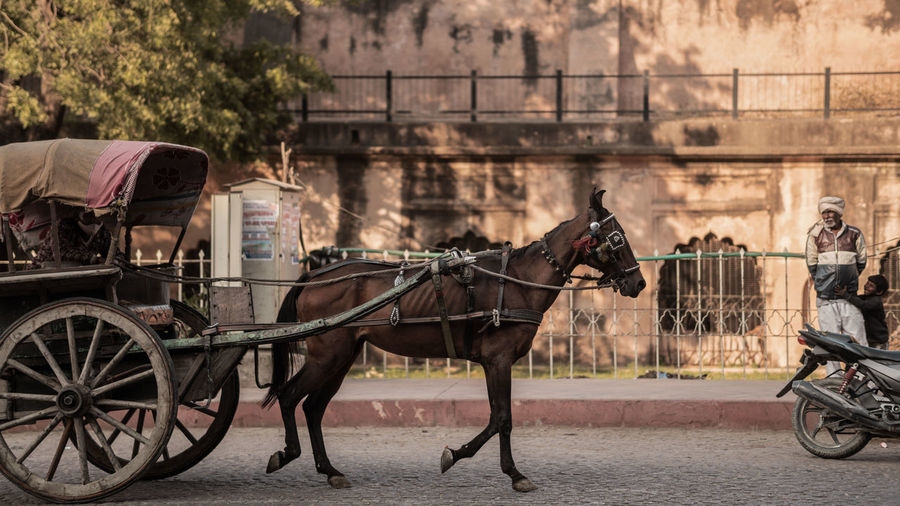 Horse cart on street