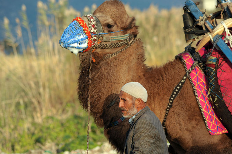 Mature Man With Camel On Field