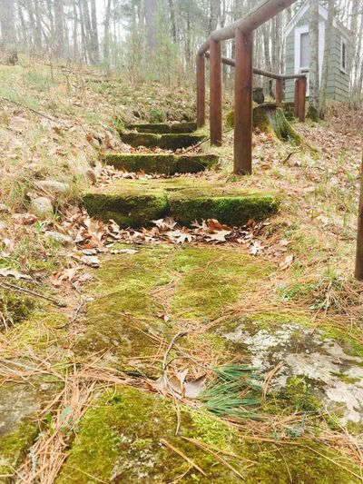 Stone Stone Steps Stone Material Nature Day No People Forest Tree Grass Outdoors Moss Moss & Lichen Northwoods Woods Cottage Cottage Life Outhouse