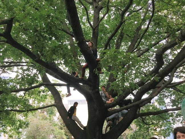 Concert Trees Climbing Escaping Burger Boogaloo