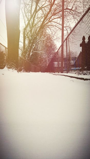 Showcase: January Snow ❄ Snowy Path Light-Play Sunrise Sun And Trees