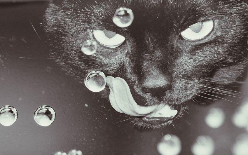 Cat looking Beautiful inside Water Blackandwhite