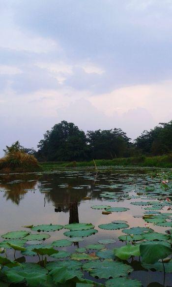 Water Sunset Nature Landscape Lotus Flower Sky