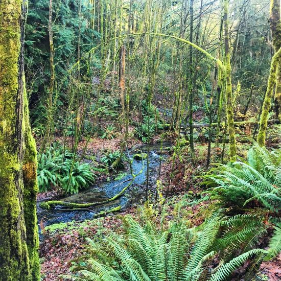 Sunday nature hike Forest Tree Tranquility Beauty In Nature Plant Nature Dogwalk