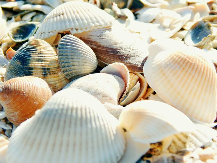 Taking Photos Relaxing Beach Shells Popular Photos Mamaia Beach No People Sunny Simple Photography Simple Things In Life Check This Out