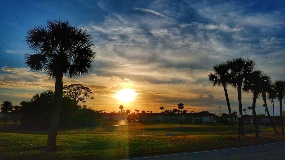 Good afternoon... 🌞 EyeEmNewHere EyeEm Best Shots EyeEm Nature Lover Sunrise Sun Tree Palm Tree Sunset Sky Grass Cloud - Sky Landscape Coconut Palm Tree Dramatic Sky Tropical Tree Shining Silhouette