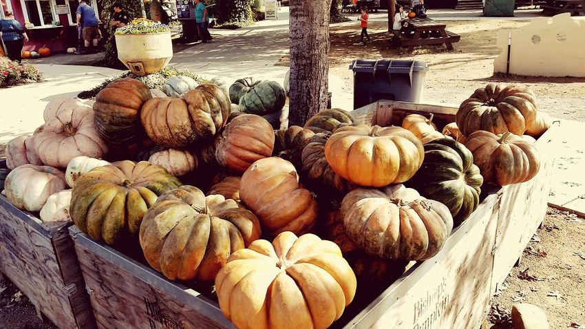 EyeEm Selects Market Vegetable Food Healthy Eating Food And Drink Retail  Agriculture Day Pumpkin Outdoors No People Freshness Squash - Vegetable Nature Close-up SupermarketPlant Vintage Farm Daytime Photography Pumpkin Farm Pumpkinpatch