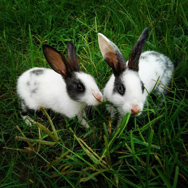 Rabbit Animal Themes Rabbit Rabbits Close-up Pets Grass Rabbit Island Rabbit Ears Rabbit Eye Rabbit Portrait Rabbit Faces Cute Pets Cute Animals Cute Rabbit Cute Rabbit ,bunny