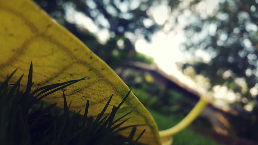 Tree Plant Focus On Foreground Green Color Growth Nature No People Outdoors Close-up Day Leaf Low Angle View Fragility Branch Survival Sky YellowLeaf Yellow Maximum Closeness