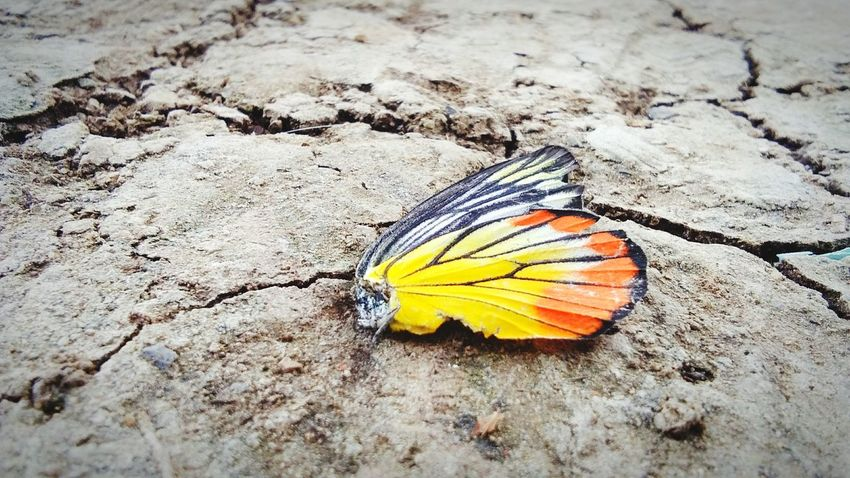 #ayutthaya Ayutthaya | Thailand #Thailand Spread Wings Butterfly - Insect Animal Markings Sand Beach Butterfly Insect High Angle View Animal Wing Close-up Wildlife Natural Pattern Bug Tiny