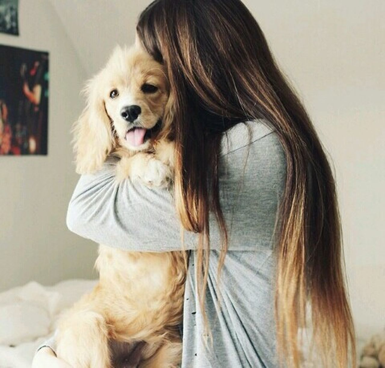 dog, pets, one animal, domestic animals, long hair, animal themes, one person, friendship, embracing, one woman only, portrait, only women, indoors, adult, people, adults only, day, mammal, close-up, young adult