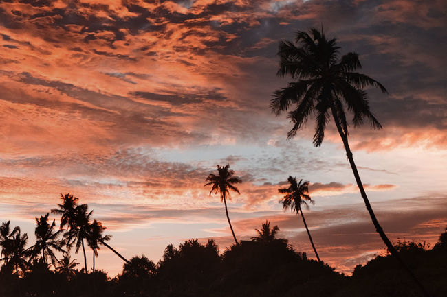 Matara Palm Tree SriLanka Beach Beachphotography Coconut Palm Tree Fujifilm Fujifilm_xseries Paradise Silhouette Skycolors Srilankatravel Sunset Tropical Climate