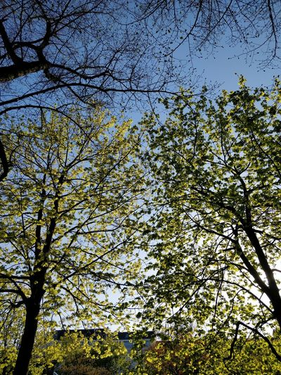multi upload test 2 Spring Summer Tranquility Tree Branch Full Frame Sky Green Color