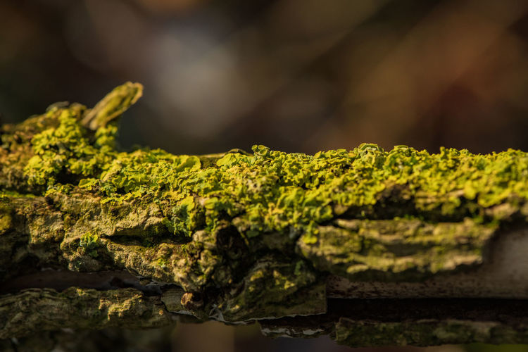 Close-up Moss Selective Focus Green Color Plant Growth Lichen Solid Rough Tree Metal Beauty In Nature Forest Branch Trunk Tree