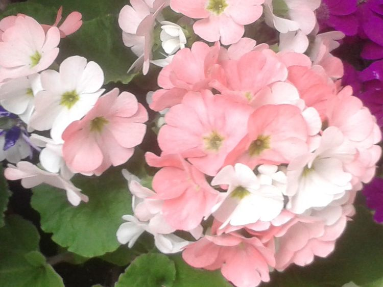 Flowers,Plants & Garden Nature_collection EyeEm Nature Lover Flowerporn