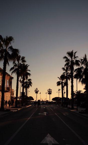 Sunset forte dei marmi Italy Street Fortedeimarmi Palme Palm Palms Tree Transportation Road Car Sky Plant Palm Tree Sunset Street Nature Tropical Climate City