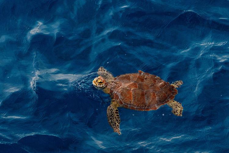 Turtle in a sea