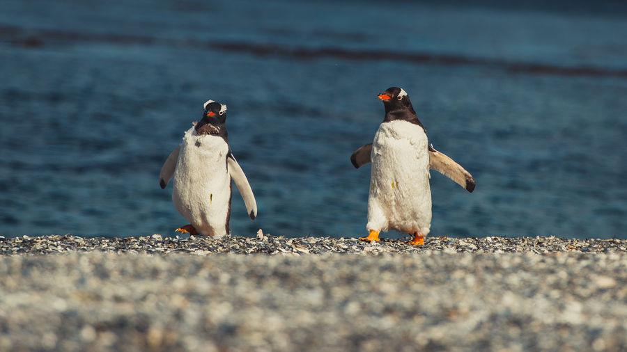 Penguins Perching At Beach