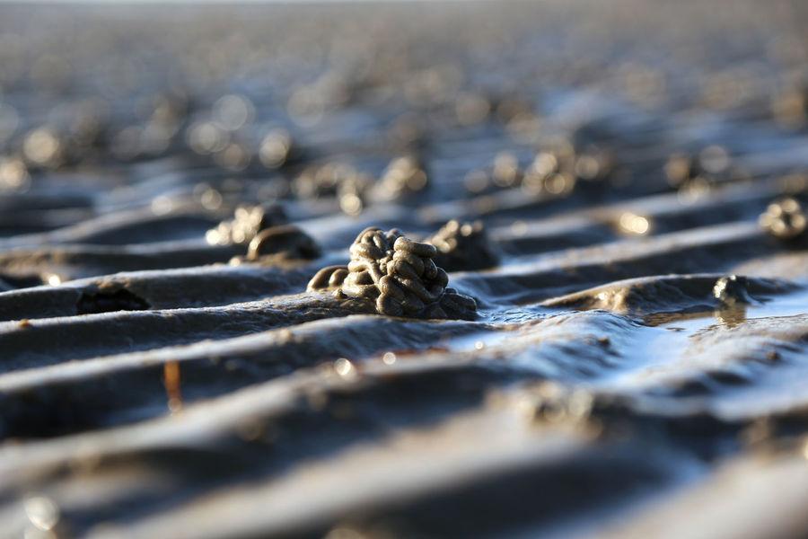 1704, Waddensea Beach Beauty In Nature Day Nature North Sea North Sea Coast North Sea Region Outdoors Sand Selective Focus Wadden Sea Wattwurmhäufchen The Great Outdoors - 2017 EyeEm Awards Perspectives On Nature