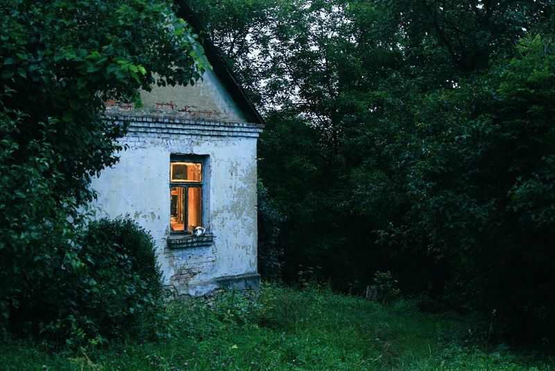 Tree Green Color House Growth Lush Foliage Outdoors Nature Green Scenics No People EastEurope Ost Україна Ukraine Osteuropa Village Village Life Warmth Light Evening село Architecture Built Structure Building Exterior Tree