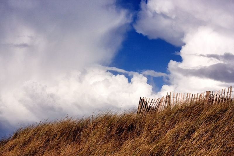 Low Angle View Of Plants Against Cloudscape