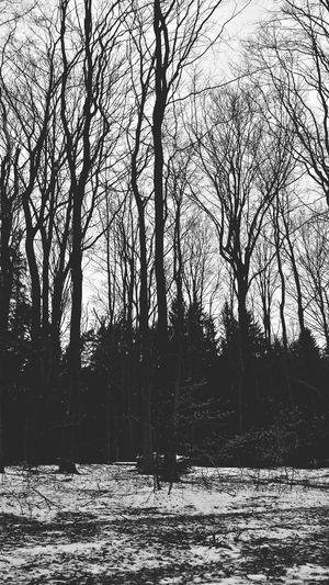 Eyem Nature Lover Nature Photography Zielony Las Naturelovers Winter Forest Smartphonephotography Blackandwhite