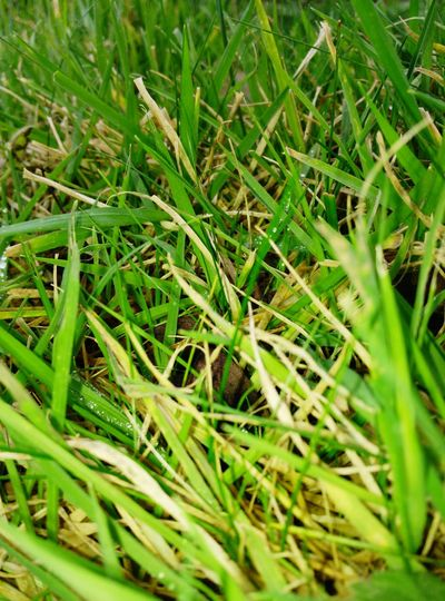 Grass Nature No People Growth Freshness Green Color Field
