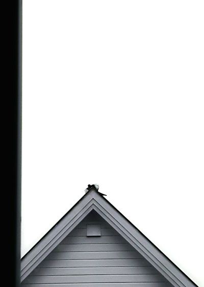 Awesome Bird House Roof