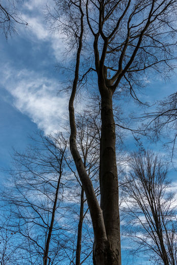 Backgrounds Bare Tree Beauty In Nature Blue Branch Cloud - Sky Day Directly Below Growth Land Low Angle View Nature No People Outdoors Plant Scenics - Nature Sky Tranquility Tree Tree Canopy  Tree Trunk Trunk