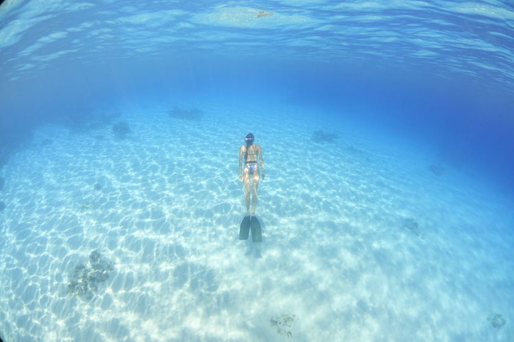 Rear view of young woman swimming undersea