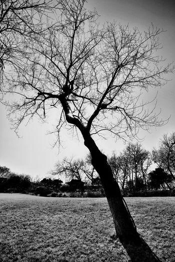不知道说什么,西湖旁边一棵树罢了~ Tree Hugging A Tree Beautiful Day Nature